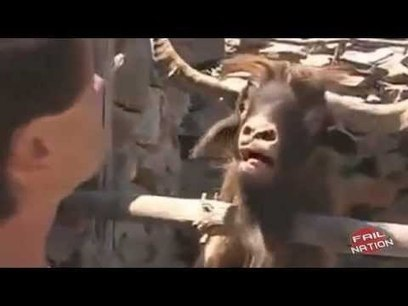When Animals Attack - Funny Compilation | War In The Ukrain | Scoop.it