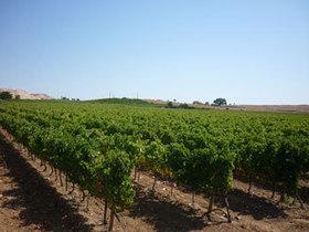 Company - Porta de Santa Catarina - Vinhos Unipessoal,Lda - Wine Producers - Portugal - Alentejo - Estremoz   Wired Wines of Alentejo   Scoop.it