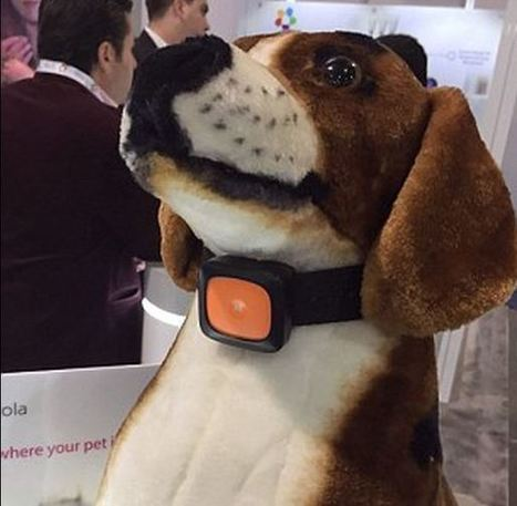World's first smartphone for dogs lets owners call their pets | Food for Pets | Scoop.it