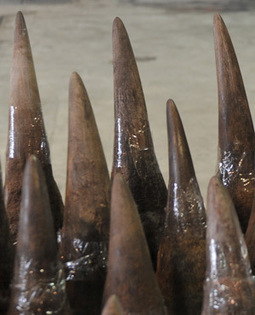US auctioneer fined $1.5m for selling rhino horns | Save our Rhino and all animals...this is what it looks like!!!!! | Scoop.it