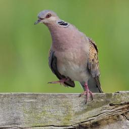 Les dix espèces d'oiseaux les plus sensibles au bruit en Espagne | Ornithomedia.com | Les sons de la nature | Scoop.it