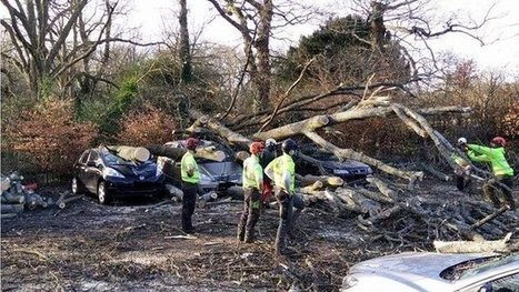 Cars crushed as wind topples tree | Trees and Woodlands | Scoop.it