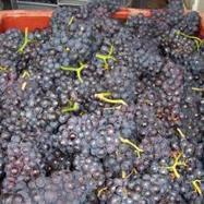Millésime solaire : quelques conseils pour maîtriser les fermentations | Latests news in Wine Fermentation | Scoop.it