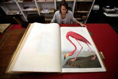 Enchères : 7,9 millions $ pour les Oiseaux d'Amérique | BiblioLivre | Scoop.it