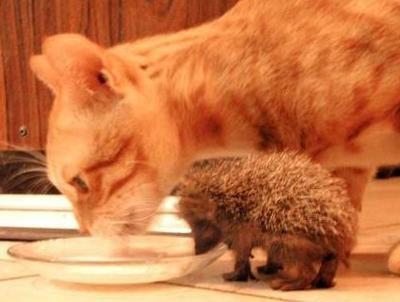Friday Funny Animals | Strange days indeed... | Scoop.it