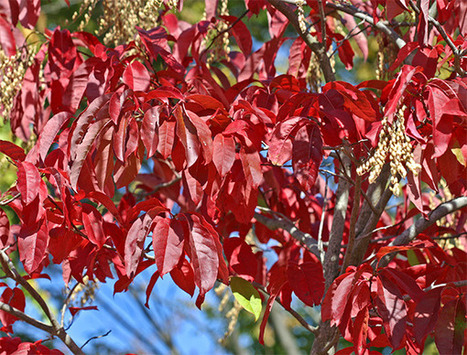 Native Plants for Beauty and Wildlife | Native Plants | Scoop.it