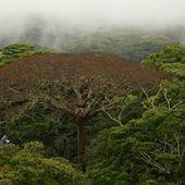 Pour la folle beauté des dernières forêts primaires   Le recours aux forêts   Scoop.it