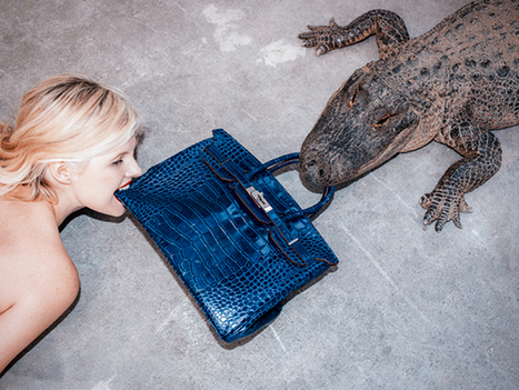 Tyler Shields Feeds Genuine $100K Hermes Bag to a Gator... Because... Art | xposing world of Photography & Design | Scoop.it
