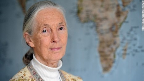 Jane Goodall: #SeaWorld 'should be #ClosedDown ~ | Rescue our Ocean's & it's species from Man's Pollution! | Scoop.it