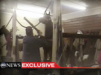 Undercover Video Investigation of the Year: Walking Horse Cruelty | ABC NEWS | Hoofcare and Lameness | Scoop.it