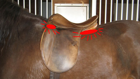 What happens when a saddle is too narrow | Saddlery | Scoop.it