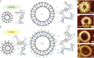 Self-replication of DNA rings | SynBioFromLeukipposInstitute | Scoop.it