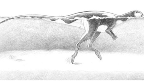 Leave Our Awesome Dinosaur Stampedes Alone | Palaeontology News | Scoop.it