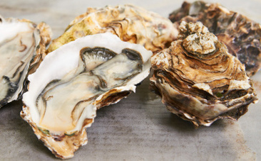 Oysters Killed by Climate Change's Evil Twin | Nature Animals humankind | Scoop.it
