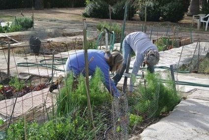 Community gardens take root in Arizona | Arizona Sonora News Service | CALS in the News | Scoop.it