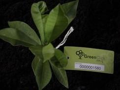 G1 - Empresa converte a audiência de sites da internet em árvores ... | Tecnologia e atualidades | Scoop.it