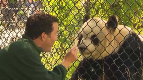 RMR: Rick and Giant Pandas - YouTube | Pandas | Scoop.it