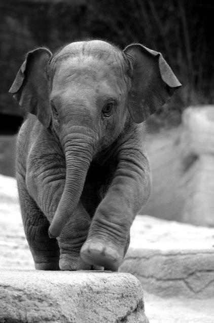 Elephants | Kruger & African Wildlife | Scoop.it