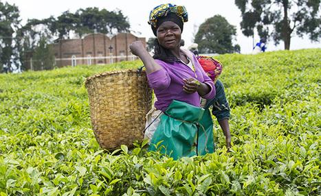 Ecologie : l'Afrique bouge | actualité optimiste pour un monde durable | Scoop.it