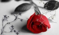 Happy Rose Day HD Wallpapers|Rose Day Quotes,Valentine Messages | Valentine Week and Special Days | Scoop.it