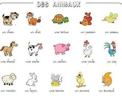 Animaux | FLE enfants | Scoop.it