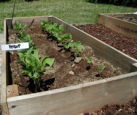 5 Reasons Why You Need to Add Raised Beds   Annie Haven   Haven Brand   Scoop.it