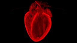 Concurso premia imagens surpreendentes do fundo do coração | Science & Technology Topics | Scoop.it