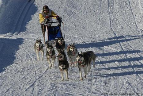 Chatonnay   Déjà la saison des chiens de traîneau !   Tourisme en pays viennois   Scoop.it