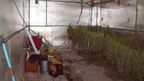 11 arrested, nearly 100 lbs of marijuana seized - WTSP 10 News | Marijuana | Scoop.it
