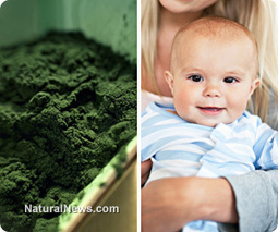 Spirulina superfood consumed during pregnancy blocks cadmium from damaging developing babies - Natural News Science | Maximized Living System for Life-Long Wellness Changes | Scoop.it