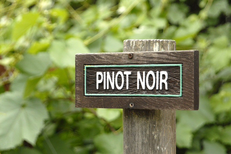 The Changing Love of Pinot Noir? | Wine website, Wine magazine...What's Hot Today on Wine Blogs? | Scoop.it
