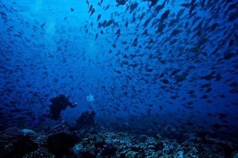 Trente années d'observations pour mieux comprendre les récifs coralliens | De Natura Rerum | Scoop.it