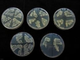 Bacterias contra la contaminación ambiental - ECOticias.com | GESTION AMBIENTAL | Scoop.it
