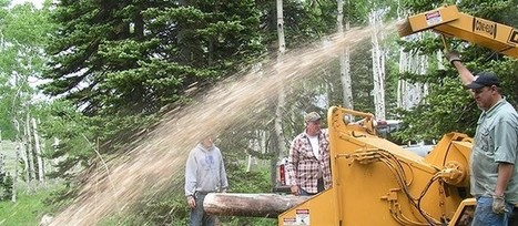 Why is Tree Stump Removal Necessary | Tree Care Services | Scoop.it