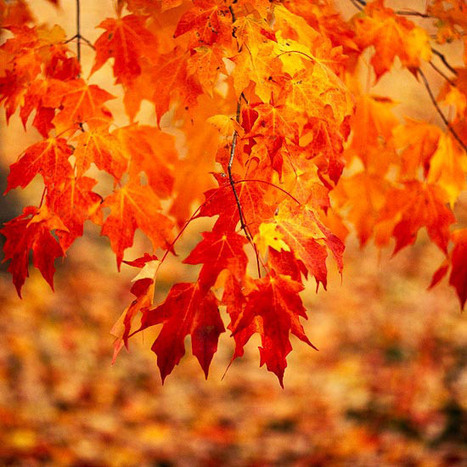 Top Trees and Shrubs for Fall Color | Landscape Creative Inspiration | Scoop.it