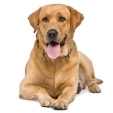 The Ethical Dog: Scientific American   Mind Candy  { interdimensionally } Cubed... It's SO yesterday to be a Square   Scoop.it