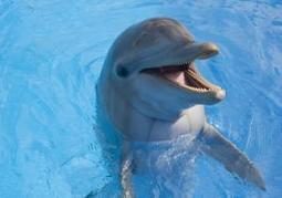 Dolphin at National Aquarium struck little boy in head with toy: lawsuit   Animal Awareness   Scoop.it