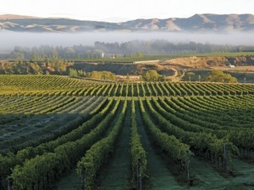 New Zealand wine exports hit record in 2014 | Autour du vin | Scoop.it