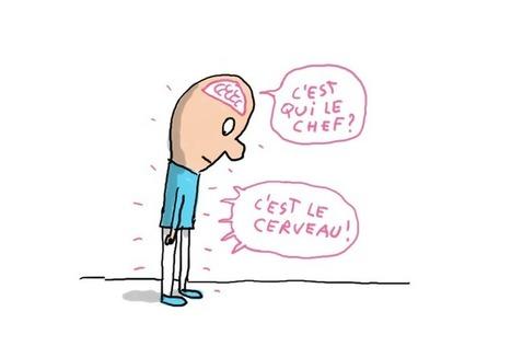 À quoi sert le cerveau ? | Parlons français! | Scoop.it