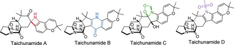 Taichunamides: Prenylated Indole Alkaloids from Aspergillus taichungensis (IBT 19404) - Kagiyama | Natural Products Chemistry Breaking News | Scoop.it