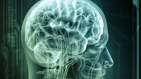 La formation de synapse géante dans le cerveau mise à jour - RTS.ch | Neurosciences, la science qui avance | Scoop.it