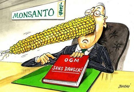 AFRIQUE du SUD – OGM : Monsanto à nouveau condamné pour publicité « non fondée » - Inf'OGM | Code Planète | Scoop.it