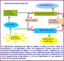 Biopsicología de la emoción | Desarrollo Emocional | Scoop.it