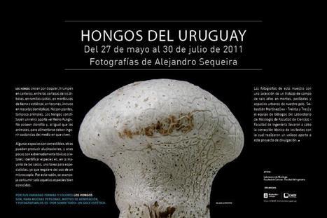 Hongos del Uruguay | Centro de Fotografía de Montevideo | Botánica | Scoop.it