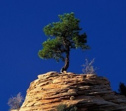 10 LIFE LESSONS TO LEARN FROM TREES | Success Stories From Across The World | Scoop.it