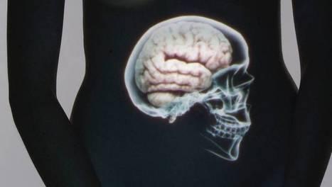 Le ventre, notre deuxième cerveau | 16s3d: Bestioles, opinions & pétitions | Scoop.it