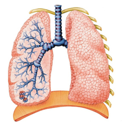 Vitamins, Supplements to Help COPD | Natural Health & Healing | Scoop.it