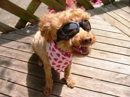 Dog Fashion 101: Make your Dog Woof with Happiness | Metropolis Time | Lifestyle | Scoop.it