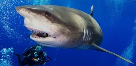 On sait enfin pourquoi les dents des requins repoussent toujours (et pas les nôtres)   Zones humides - Ramsar - Océans   Scoop.it