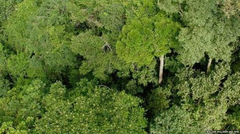 Half of all tree species in Amazon 'face extinction' - BBC News | Erba Volant - Applied Plant Science | Scoop.it
